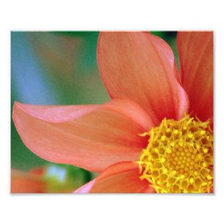 Bright Burst Flower Photo Print