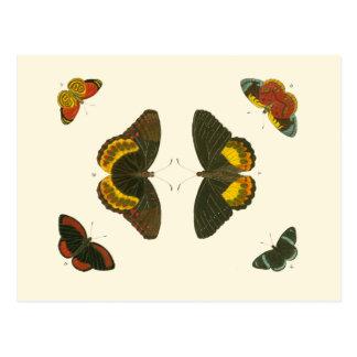 Bright Butterflies by Pieter Cramer Postcard