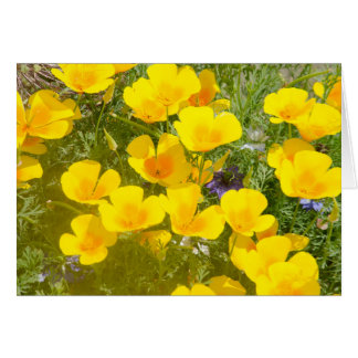 Bright Californian Poppies general card