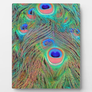 Bright Colorful Peacock Feathers Display Plaques