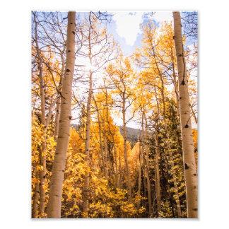Bright Fall Aspen Leaves Art Photo