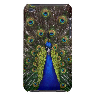 Bright girly pretty peacock bird nature photograph iPod Case-Mate cases