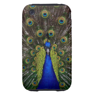 Bright girly pretty peacock bird nature photograph iPhone 3 tough cases