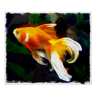 Bright Golden Koi in Dark Fish Pond Poster