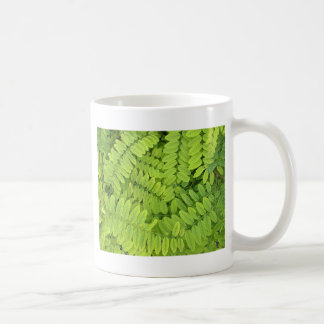 Bright green leaves and small acacia with dew drop basic white mug