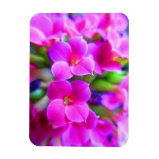 Bright Happy Kalanchoe Flowers Pink Magenta Purple Magnet