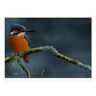 Bright Kingfisher gifts Postcard