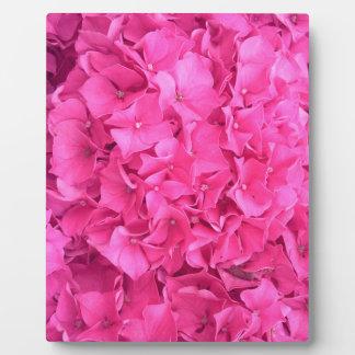 Bright Magenta Hydrangea Flower Photo Plaques
