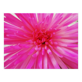 Bright Neon Pink Football Mum Flower Close-up Poster