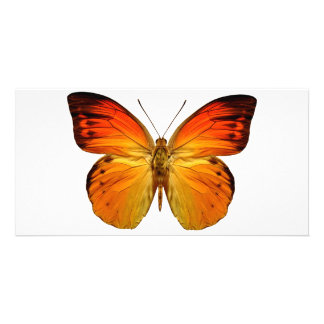Bright Orange Butterfly Personalized Photo Card