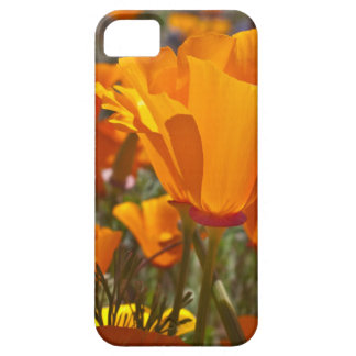 Bright orange california poppies iPhone 5 cover