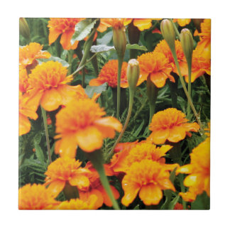 bright orange flowers ceramic tile