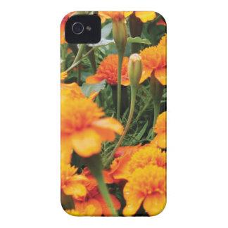 bright orange flowers iPhone 4 cover