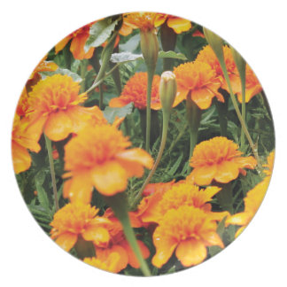 bright orange flowers plate
