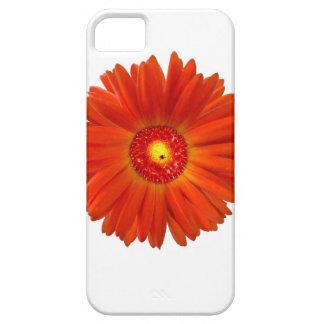 Bright Orange Gerbera Daisy iPhone 5 Cases