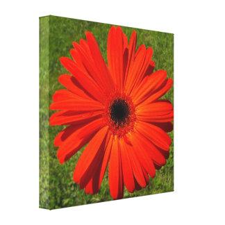 Bright Orange Gerbera Daisy on Green Grass Canvas Print