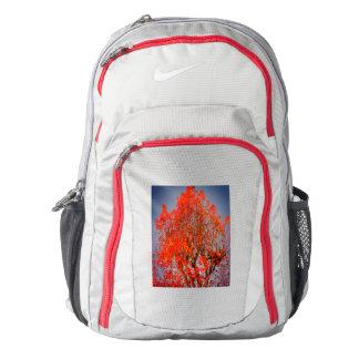 bright orange liquidamber tree foliage backpack