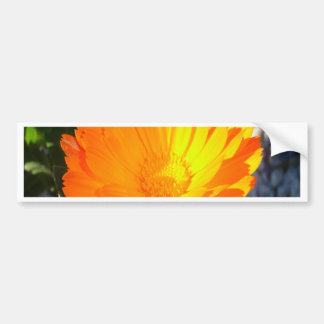 Bright Orange Marigold In Bright Sunlight Bumper Sticker