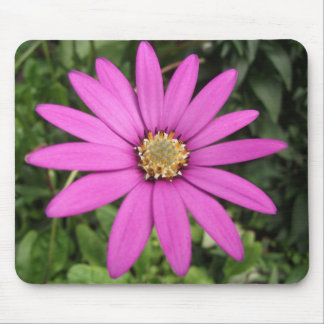 Bright pink African daisy Mouse Pad