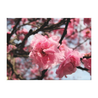 bright pink blossoms stretched canvas prints