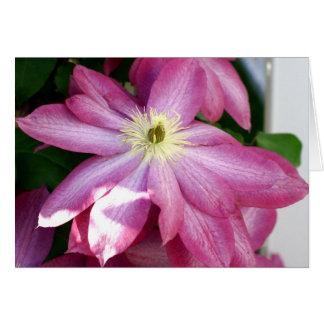 Bright Pink Clematis Card