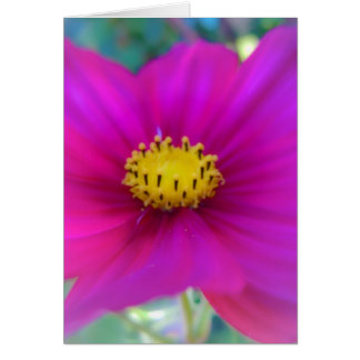 Bright Pink Cosmo Greeting Card