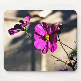 Bright Pink Cosmos - Three Mouse Pad
