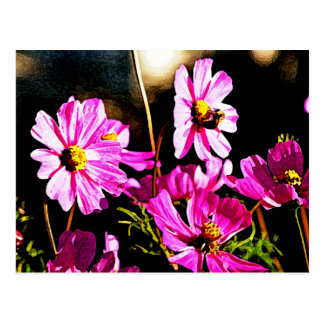 Bright Pink Cosmos with a Bee Postcard