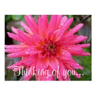 "Bright Pink Dahlia ""Thinking of you..."" Postcard"