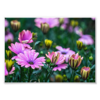 Bright Pink Daisy Flowers Photo Print