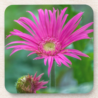 Bright pink flower coasters