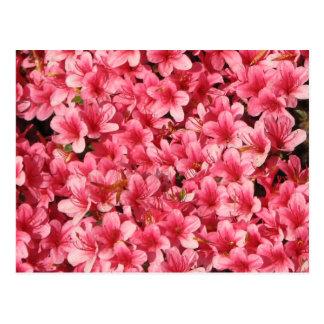 Bright Pink Flowers Postcard