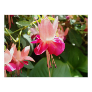 Bright Pink Fuschia Poster