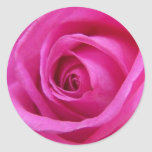 Bright Pink Rose Sticker