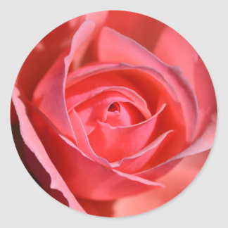 Bright Pink Rose Stickers