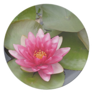 Bright Pink Water Lily Flower Plates