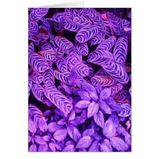 Bright Purple Tiger Leaves Greeting Note Card