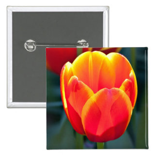 Bright red and yellow tulip bloom on green pin