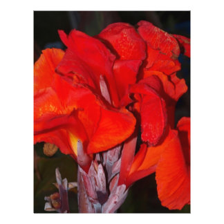 Bright Red Canna Lily 21.5 Cm X 28 Cm Flyer