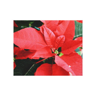 Bright Red Christmas Poinsettia Canvas Print