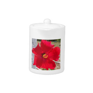 bright red tropical hibiscus flower