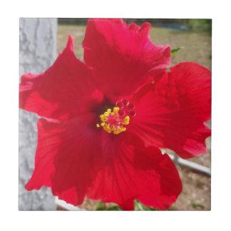 bright red tropical hibiscus flower ceramic tile