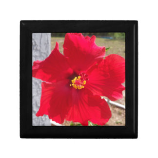 bright red tropical hibiscus flower gift box