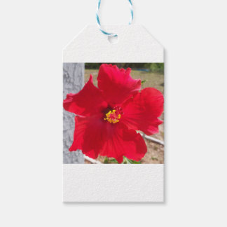 bright red tropical hibiscus flower gift tags