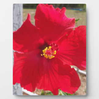 bright red tropical hibiscus flower plaque