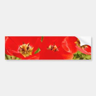 Bright Red Tulips Bumper Sticker