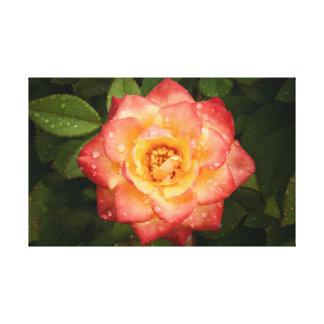 Bright Rose Canvas Print