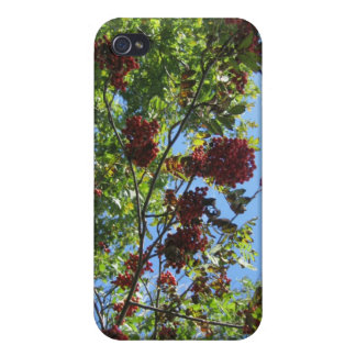Bright Rowan Sky Cases For iPhone 4
