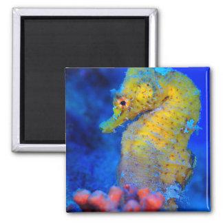 Bright Seahorse | Hippocampus Magnet