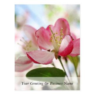 Bright Spring Apple Blossoms Postcard
